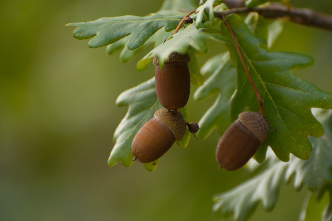 A close up of a fruit hanging from a tree